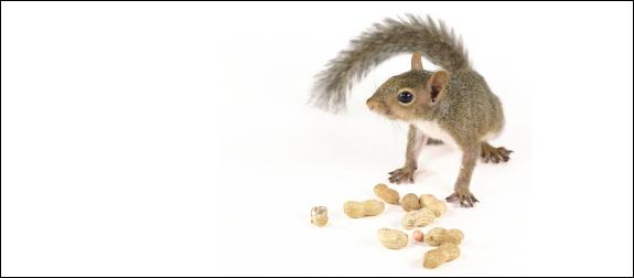 Post image for La fin de l'allergie à l'arachide?
